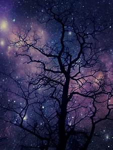 photography tree beautiful edit space galaxy stars my ...