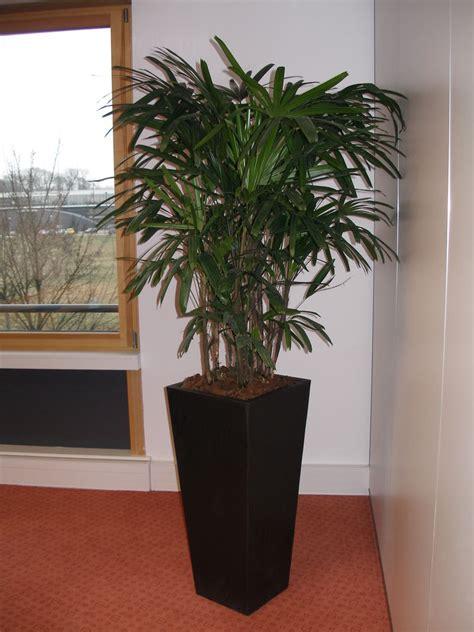 plantes dépolluantes chambre à coucher modele de toiture pour maison 7 maison 3 chambres et