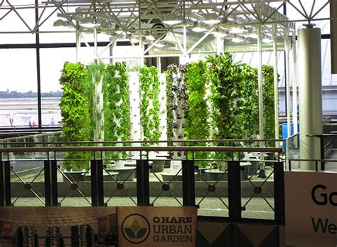 Inside Peek At O'hare Airport's Vertical Farm  Urban Gardens