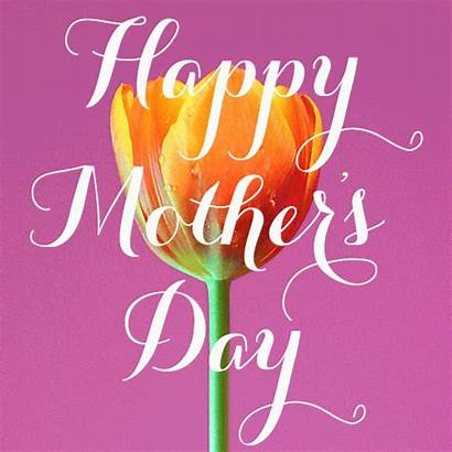 Mothers Mother Happy Animated Wishes Tulip Animations