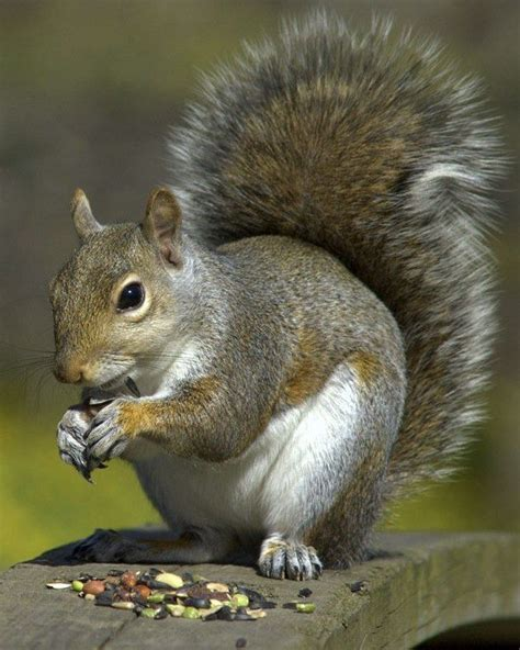 attracting squirrels chipmunks and rabbits to your yard