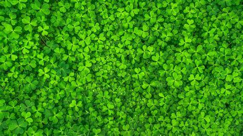 Green Leaf Plants HD Green Wallpapers | HD Wallpapers | ID ...