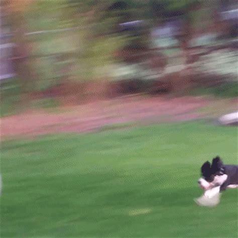 dog lol gif  americas funniest home  find