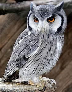 Taken at the Small Breeds Farm Park and Owl Center Kington ...