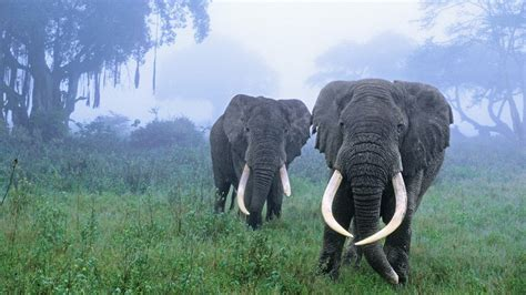 Forest Animal Wallpaper - forest elephant animals hd wallpapers hd