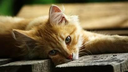 Cat 1080p Wallpapers Eyes