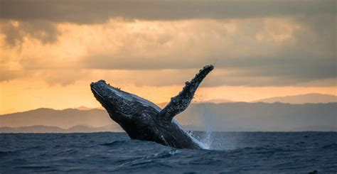 No, A Whale Didn't Cause Bitcoin To Crash Overnight ...