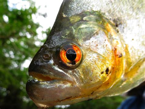 cuyabeno national reserve     amazon