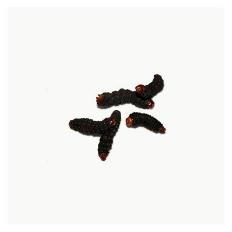 manger des chenilles d 39 afrique insectes comestibles fr