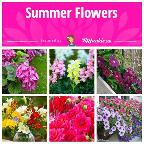 best summer flowers to plant 16 best flowers to plant for summer tip junkie