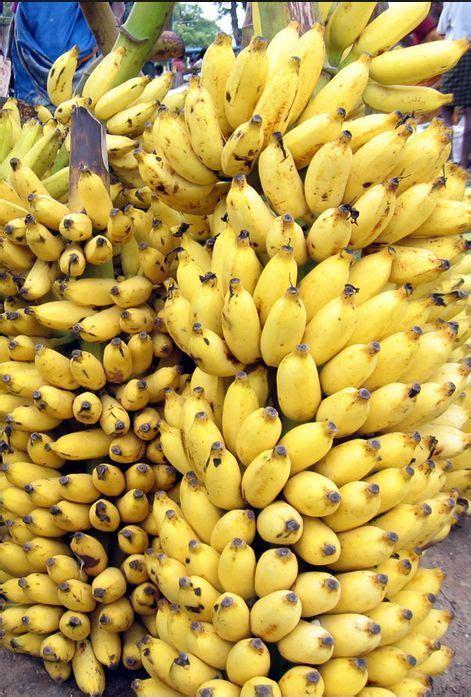 banana seeds 10 fresh musa acuminata edible dwarf banana tree plant seeds tropical fruit ebay