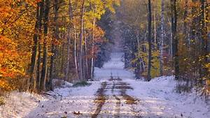 Snowy Path Forest Late Autumn wallpapers | Snowy Path ...