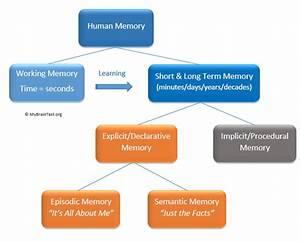 Human, Memory, Model