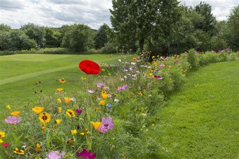 Wildblumen Im Garten by Pflegeleicht Und Wundersch 246 N Wildblumenwiesen Im Garten