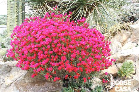 piante grasse da terrazzo piante da esterno resistenti al sole e al freddo