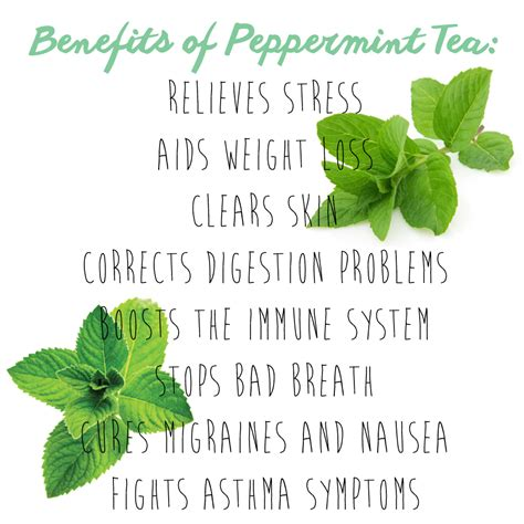 peppermint tea benefits how i quit smoking there you are sibby