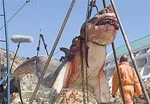 15-Ton Prehistoric Shark Captured Off Coast Of Pakistan