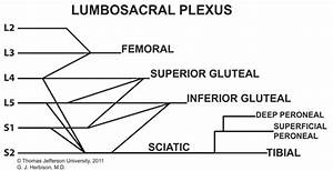 Sacral Plexus Diagram Lumbosacral Pl