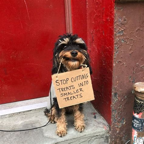 dog protests  annoying everyday   funny