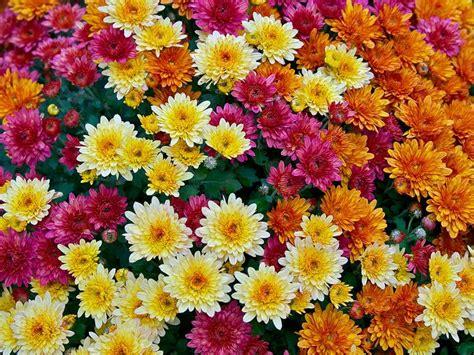 Garten Pflanzen Im Herbst by Herbstblumen Garten Winterhart Herbstblumen Die