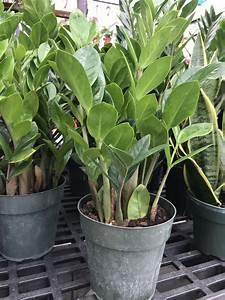 House, Plants, U2014, Nature, U0026, 39, S, Corner