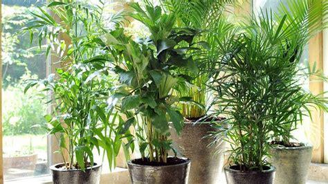 plante salle de bain sans lumiere allergies aux plantes d int 233 rieur de maison label allerg 232 nes contr 244 l 233 s