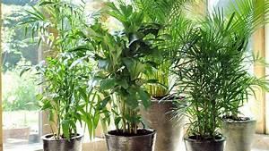 Plante Fleurie Intérieur : allergies aux plantes d int rieur de maison label ~ Premium-room.com Idées de Décoration