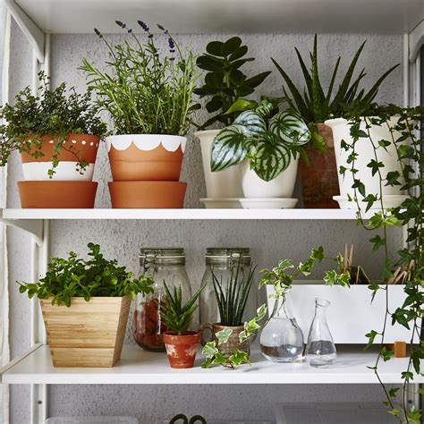 plantes cuisine comment créer un jardin intérieur