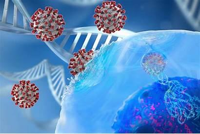 System Immune Covid Genetic Genetics Sars Cov