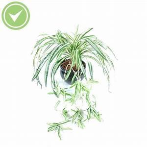 Plante Fleurie Intérieur : plante verte retombante interieur ~ Premium-room.com Idées de Décoration