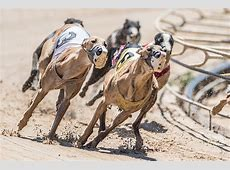 Greyhound racing ban heads to Florida voters Blogs