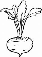 Beet Lettuce Turnip Coloring Line Pages Printable Beetroot Salad Drawings sketch template