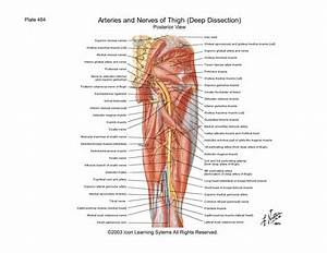 Hamstring Muscles Function  U2014 Kejomoro Fresh Ideas