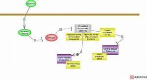 Statin Pharmacodynamics Pathwayrat Genome Database