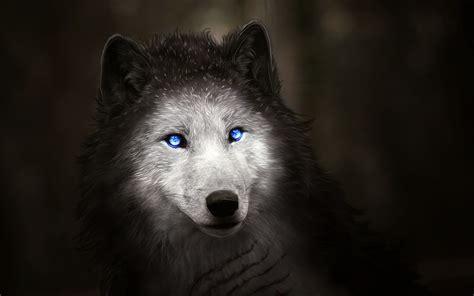 Digital Wolf Wallpaper by Wallpaper Wolf Blue Digital Hd Creative