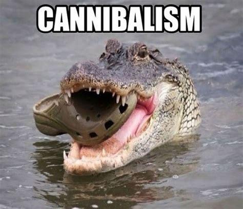 Funny Meme Animals - animal memes 15 pics