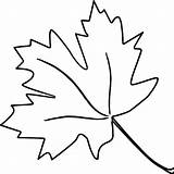Leaf Coloring Pages Leaves Oak Maple Tropical Sugar Printable Drawing Getcolorings Blank Autumn Pa Clipartmag sketch template
