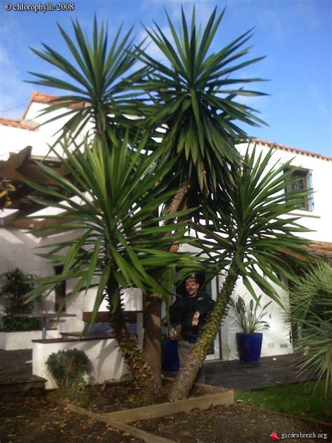 yucca exterieur resistant au gel yucca exterieur resistant au gel 28 images yucca agavac 233 es la palmeraie p 233 pini 232