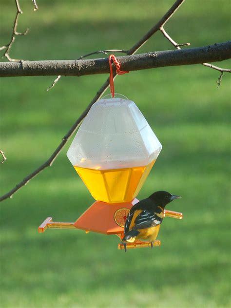 baltimore oriole  bird feeder   day   set