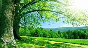 Nature Summer HD Wallpaper