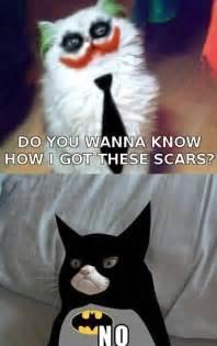 batman cat angry cat batman quotes quotesgram