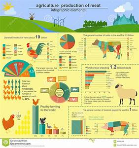 Animal Husbandry Chart Agriculture Animal Husbandry Infographics Vector