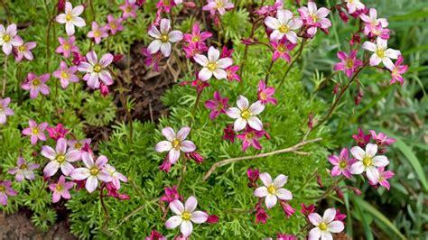 Stauden Im Frühjahr Pflanzen, Pflegen Und Düngen