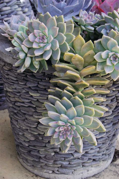 Succulent containers a cool way to enjoy gardening in the heat - Houston Chronicle