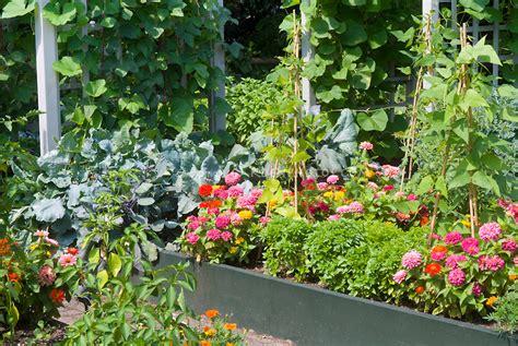 flowers and vegetables garden plant flower stock