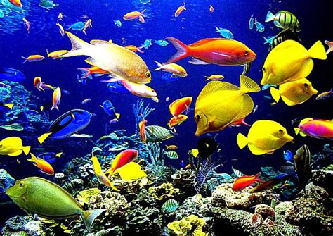 Fish Animation Wallpaper Free - animated fish wallpaper photo wallpapers