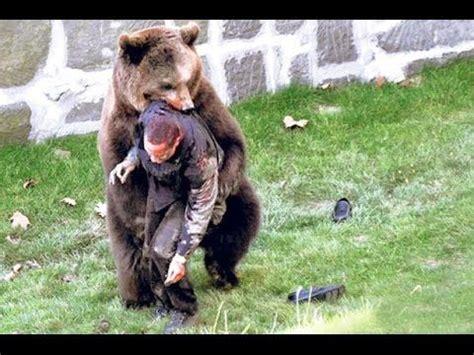 bear kills  man bear attack  animals pinterest