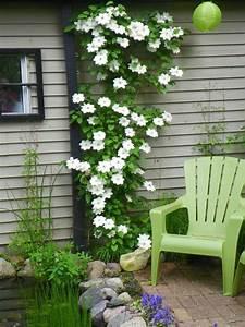 Teich Für Balkon : clematis kletterpflanze tipps pflegen garten terrasse balkon teich garten blumen pinterest ~ Sanjose-hotels-ca.com Haus und Dekorationen