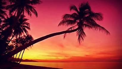 Chillhop Beat Summer Sunset Palm Tree Trackblasters