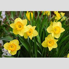 Best Of New England With Nantucket Daffodil Festival  Tye's Top Tour & Travel